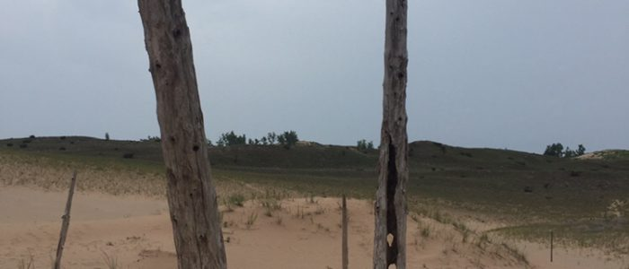 Dunes Trail Ghost Forest