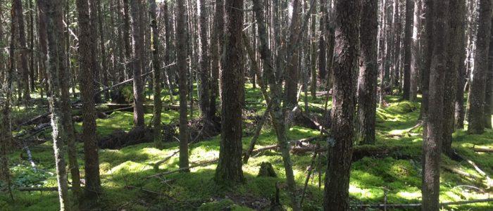 Coastal Trail, Pukaskwa National Park