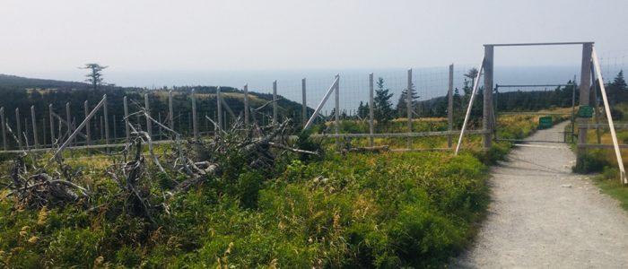 Cape Breton Highlands - Skyline Trail Moose Exclosure