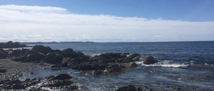 Kittiwake Coast
