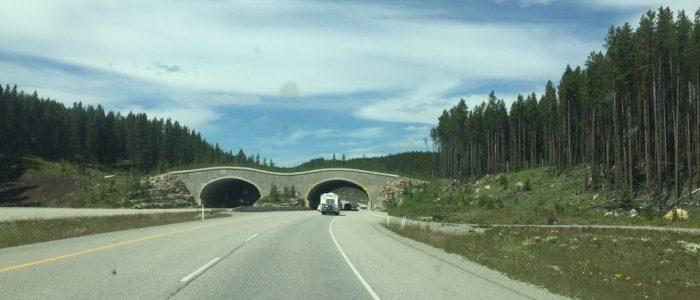 Glacier NP Wildlife Crossing (7393)