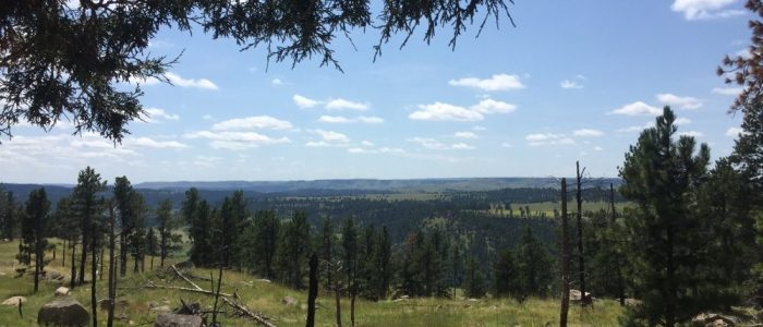Devils Tower Area (7522)