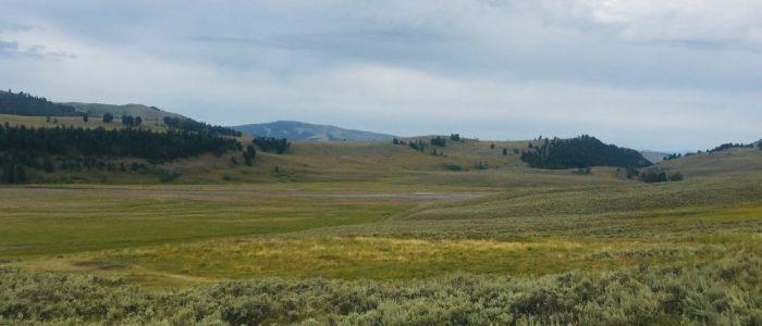 Lamar Valley (7662)