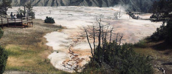 Mammoth Hot Springs (7730)