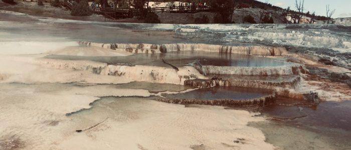 Mammoth Hot Springs (7733)