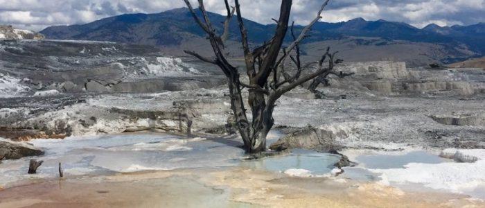 Mammoth Hot Springs (7734)
