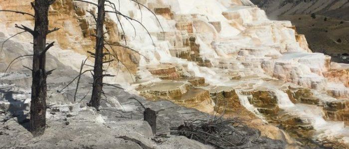 Mammoth Hot Springs (7742)