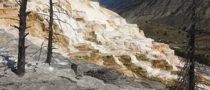 Mammoth Hot Springs (7743)