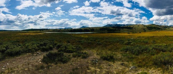 Swan Lake (7754)