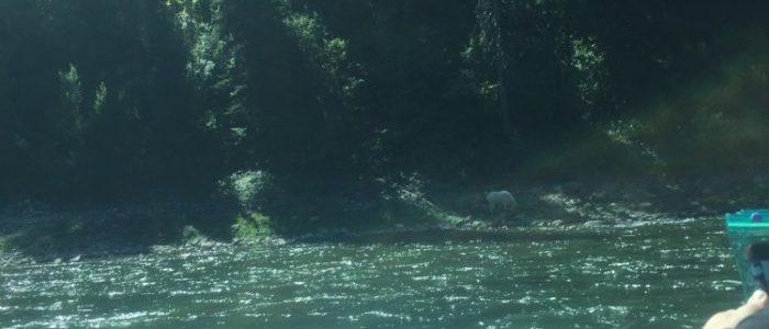 Snake River (7798)
